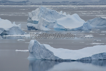 antarctica antarctic penninsula brown bluff iceberg