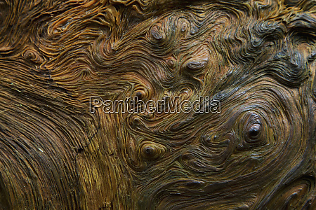abstract wood grain