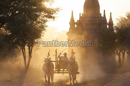 bullock cart and pagoda sunset bagan