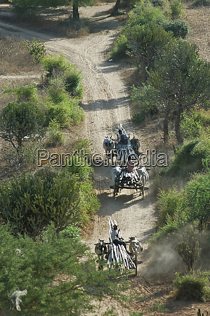 myanmar bagan caravan of ox carts