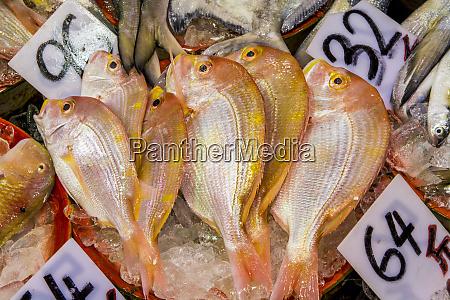 fish vendors on canton road mongkok