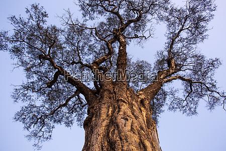 africa botswana moremi game reserve low