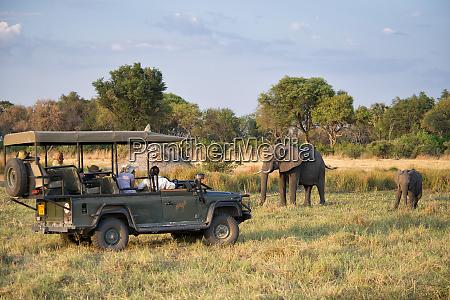safari jeep and people watching elephants