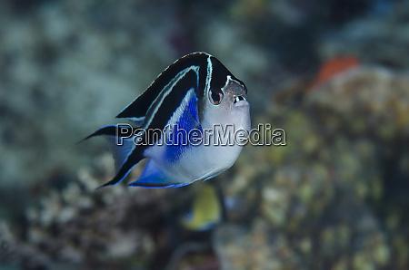 indonesia papua cenderawasih bay frontal view