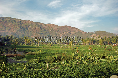 green vegetables plantation in front of