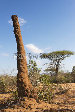 clay pillar with acacia tree south