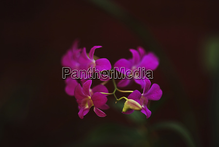 sri lanka kandy peradeniya botanical gardens