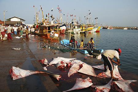 sri lanka mirissa fishermen gathering on