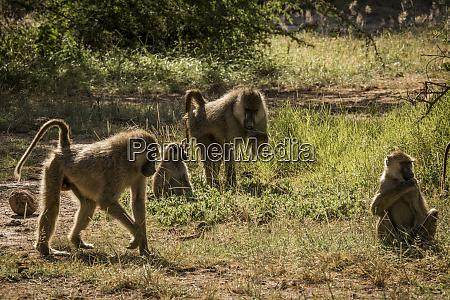 africa kenya amboseli national park yellow