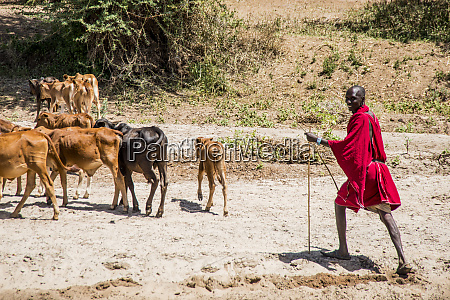 africa kenya outside amboseli national park
