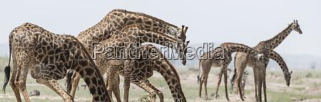 africa kenya amboseli national park close