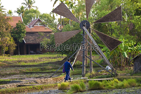 rice paddies and windmill near chiang