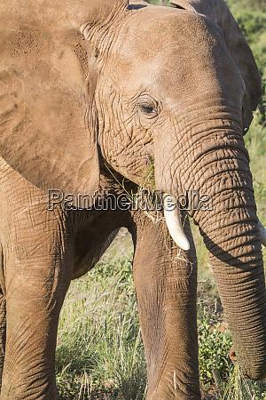 africa kenya samburu national reserve elephants