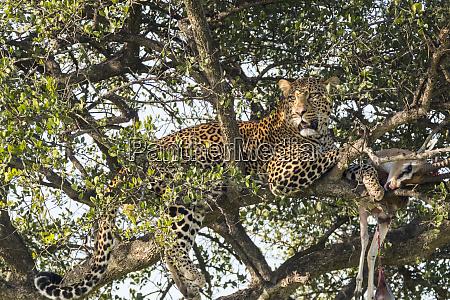africa kenya masai mara national reserve