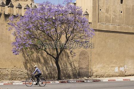 morocco fes cyclist rides pass a