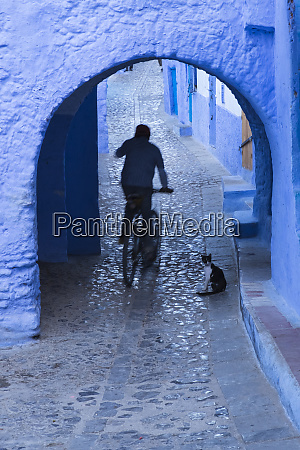 morocco chefchaouen bicyclist rides past cat