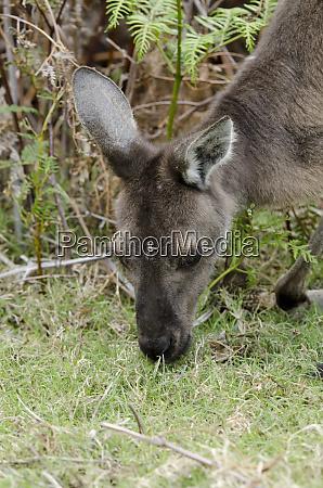 western australia perth yanchep national park