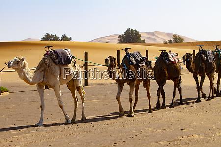 merzouga erg chebbi sahara desert morocco