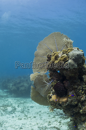 soft coral sea fans are attached