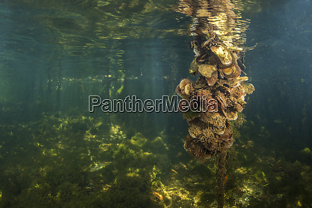 a mangrove root is covered with