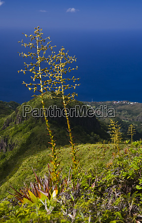 martinique french antilles west indies flower