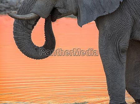 africa namibia etosha national park drinking