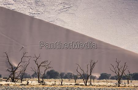 africa namibia namib naukluft park sand