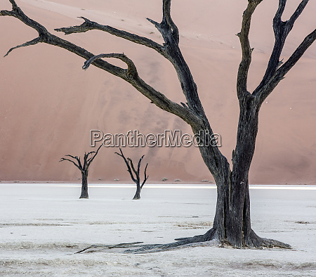africa namibia namib naukluft park dead