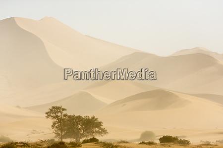 africa namibia namib naukluft park sandstorm