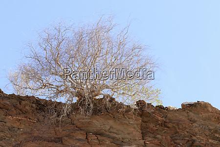 africa namibia namib naukluft park mountain