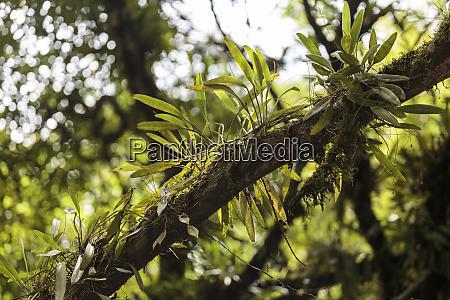 south america trinidad arima valley asa