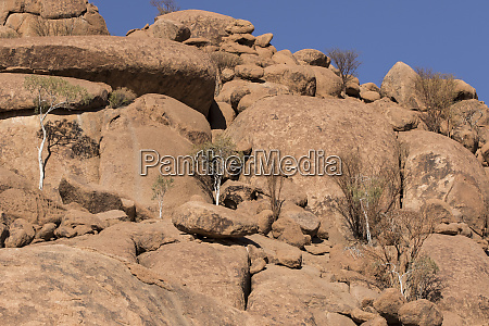 africa namibia twyfelfontein trees growing in