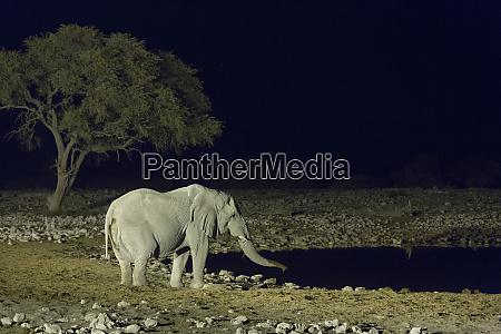 africa namibia etosha national park elephant