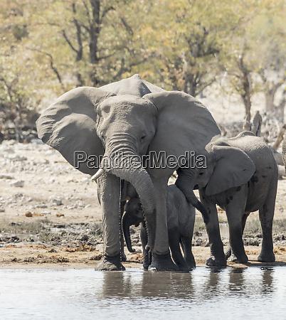 africa namibia etosha national park mother