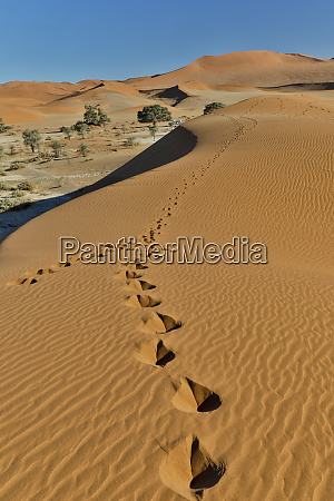 sand ripple patterns in the desert