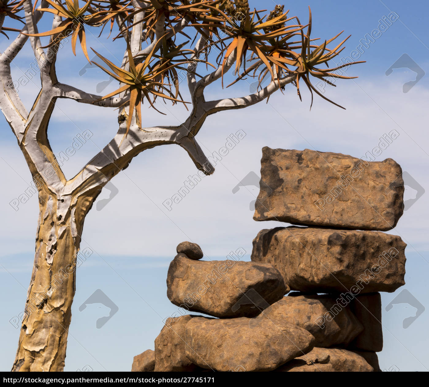 africa, , namibia., boulders, and, quiver, tree - 27745171