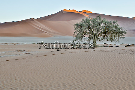 africa namibia sossusvlei dunes