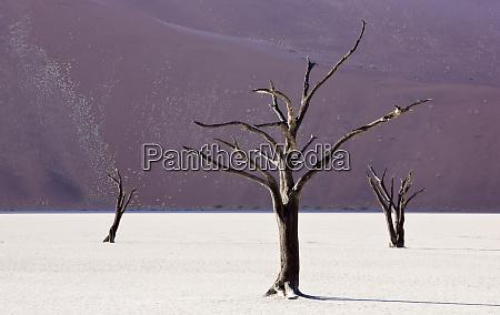 africa namibia namib naukluft national park