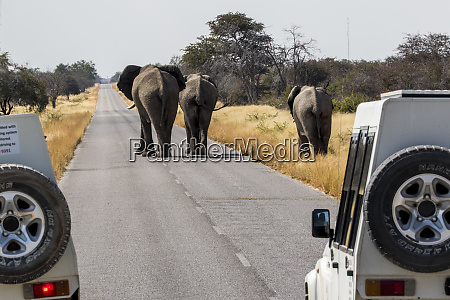 africa namibia etosha national park elephants