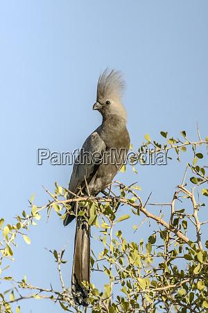 etosha national park namibia africa grey