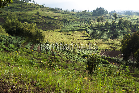 africa rwanda near volcanoes national park