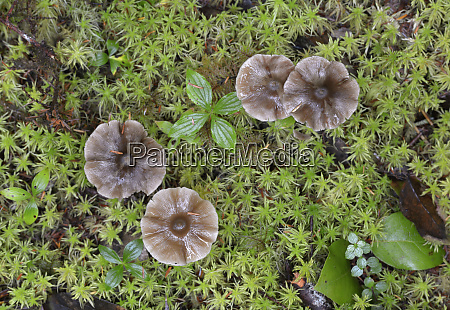 canada british columbia vancouver island mushrooms