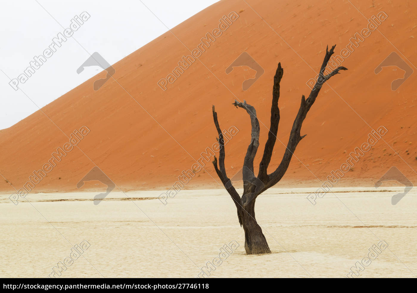 africa, , namibia, , namib, desert, , namib-naukluft, national - 27746118