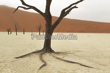 africa, , namibia, , namib, desert, , namib-naukluft, national - 27746124