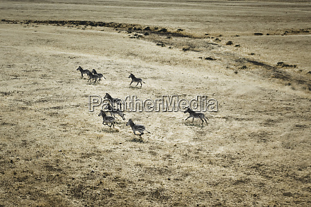 hoarusib, valley, , namibia., aerial, view, of - 27746317