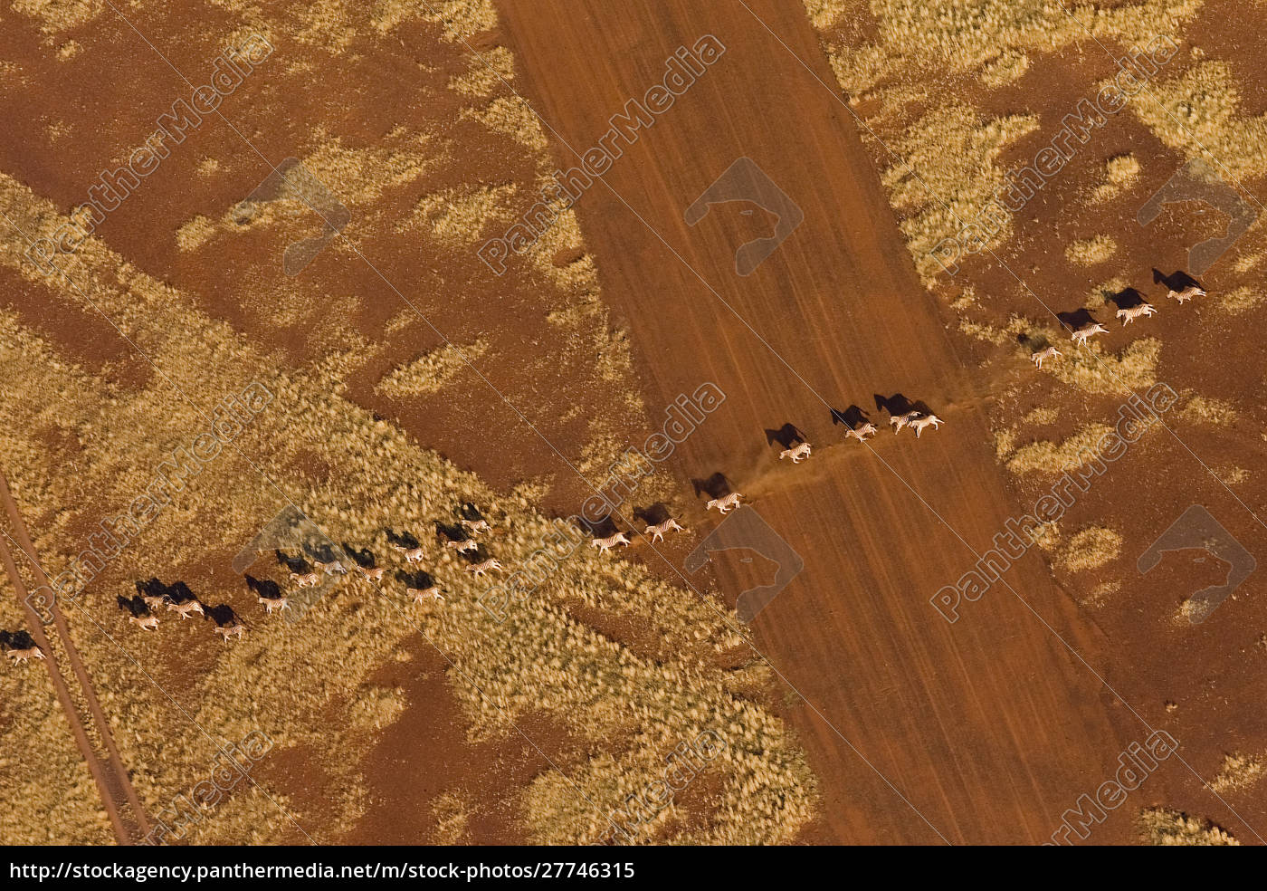 namibian, desert., herd, of, plains, zebra - 27746315