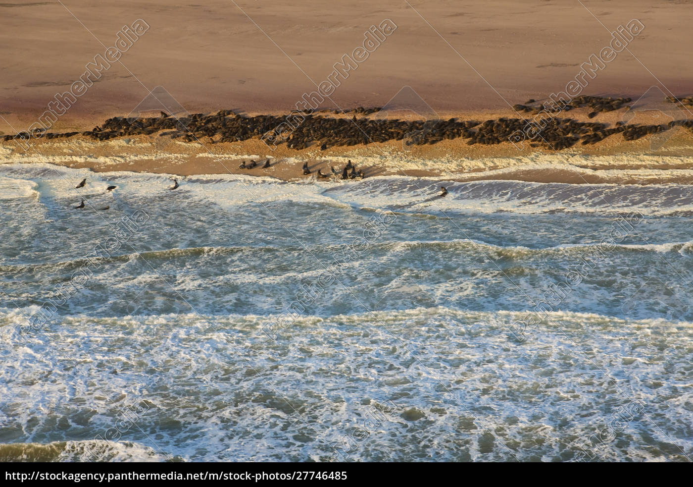 seal, colony, on, skeleton, coast, , namibia, - 27746485