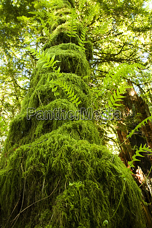 mossy tree gibsons bc canada