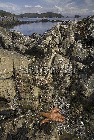 broken island group pacific rim national