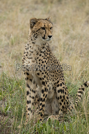 south africa pretoria de wild shingwedzi